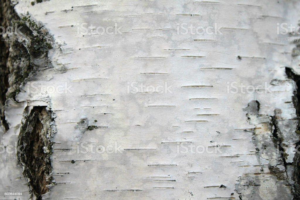 closeup of birch bark texture, natural background paper stock photo