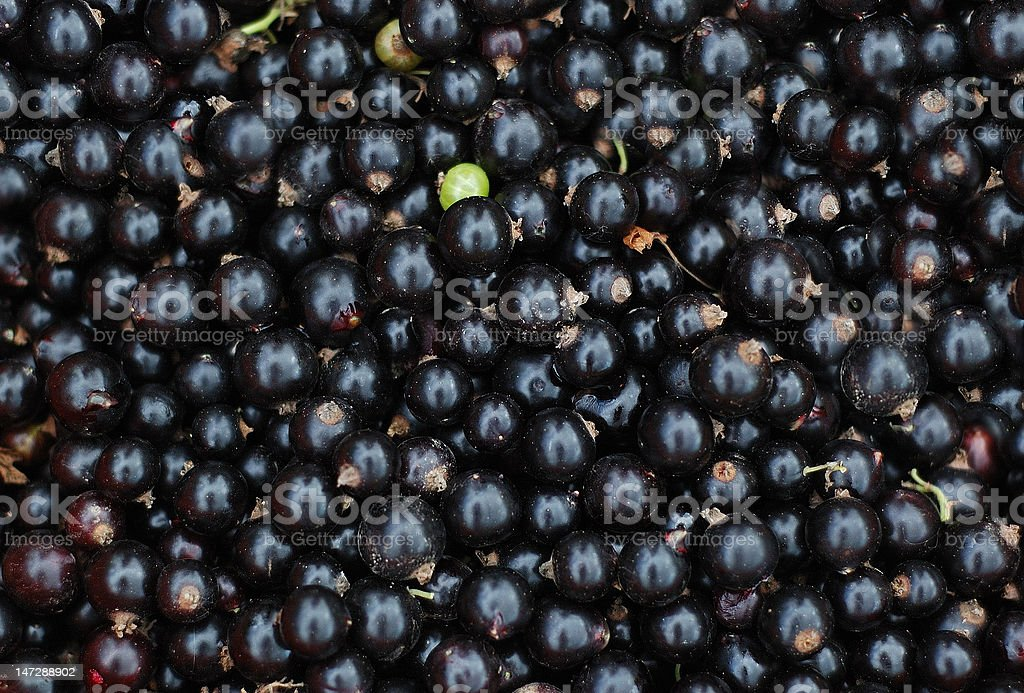 close-up of black currants royalty-free stock photo