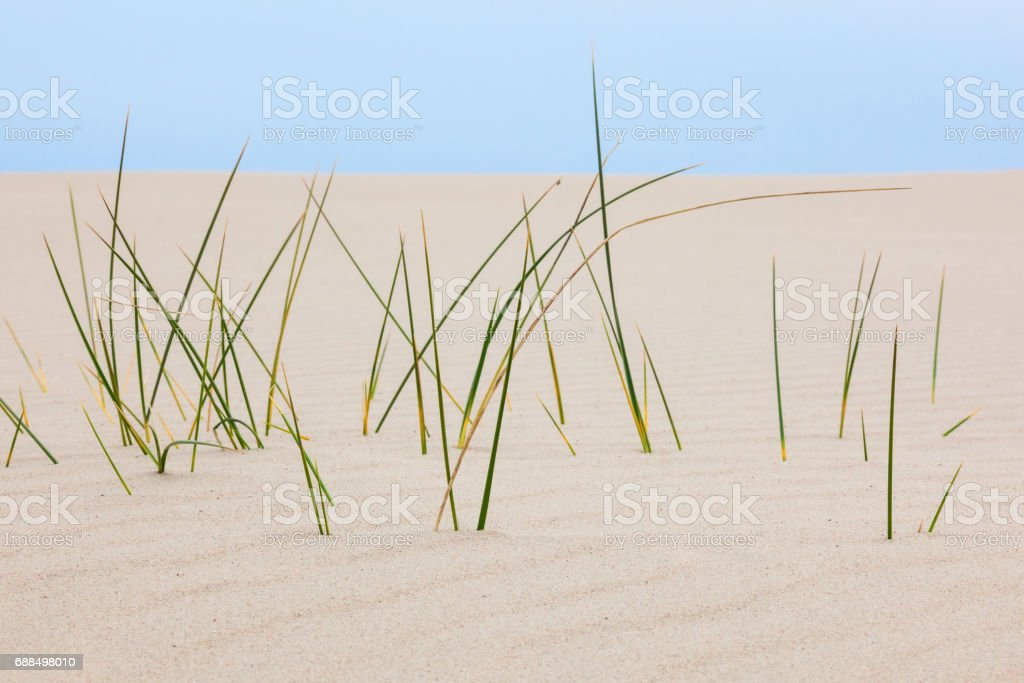Closeup of blades of grass in sand dune stock photo