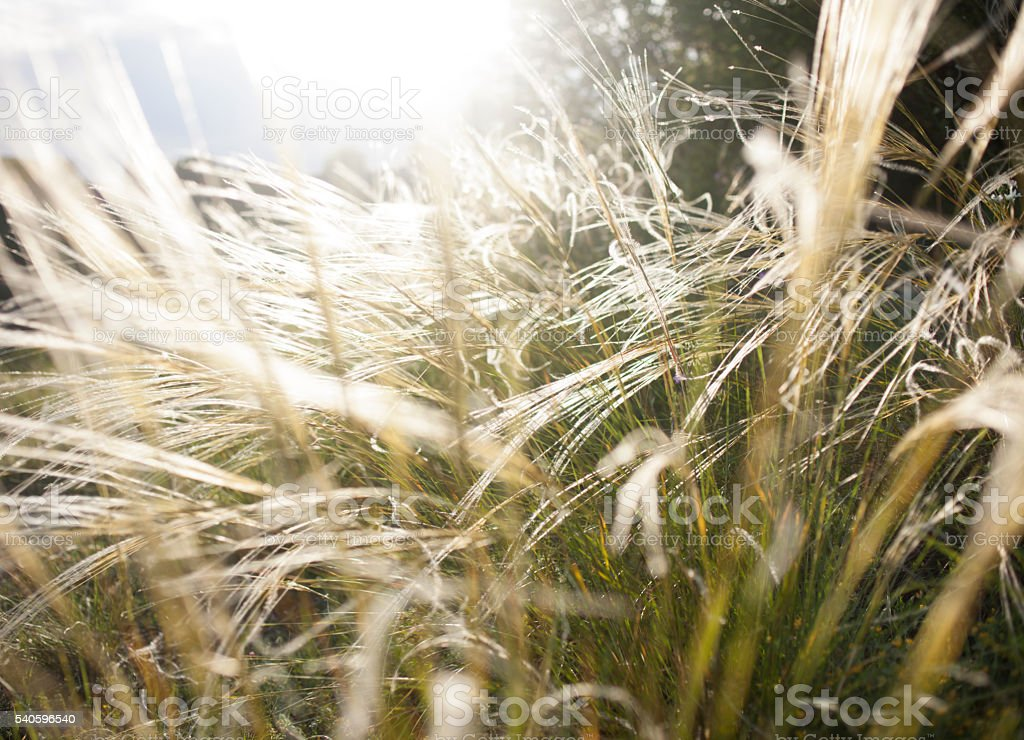Close-up of blades of grass stock photo