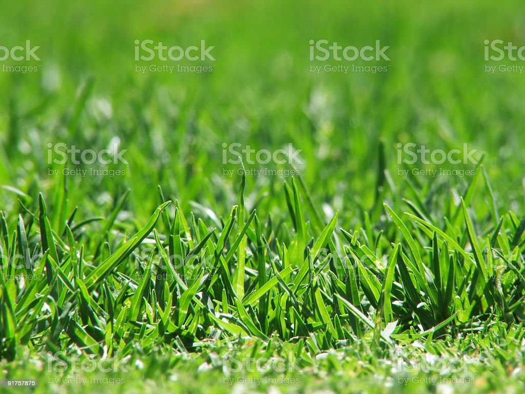 Close-up of blades of green grass stock photo