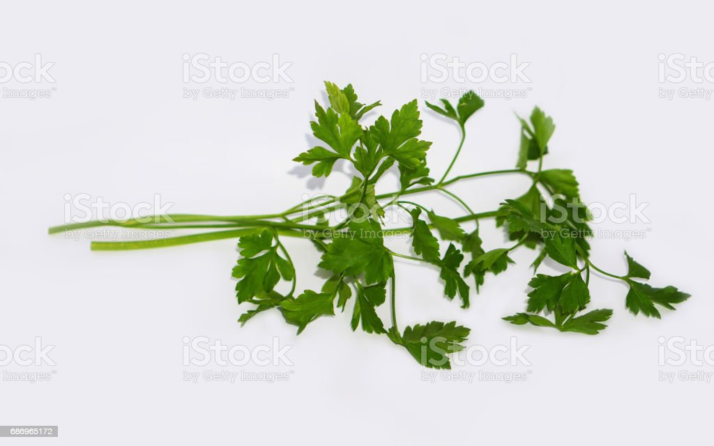 Closeup of blades of green parsley stock photo