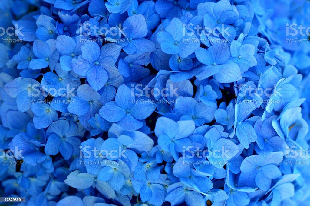 Closeup of blue wedding flowers royalty-free stock photo