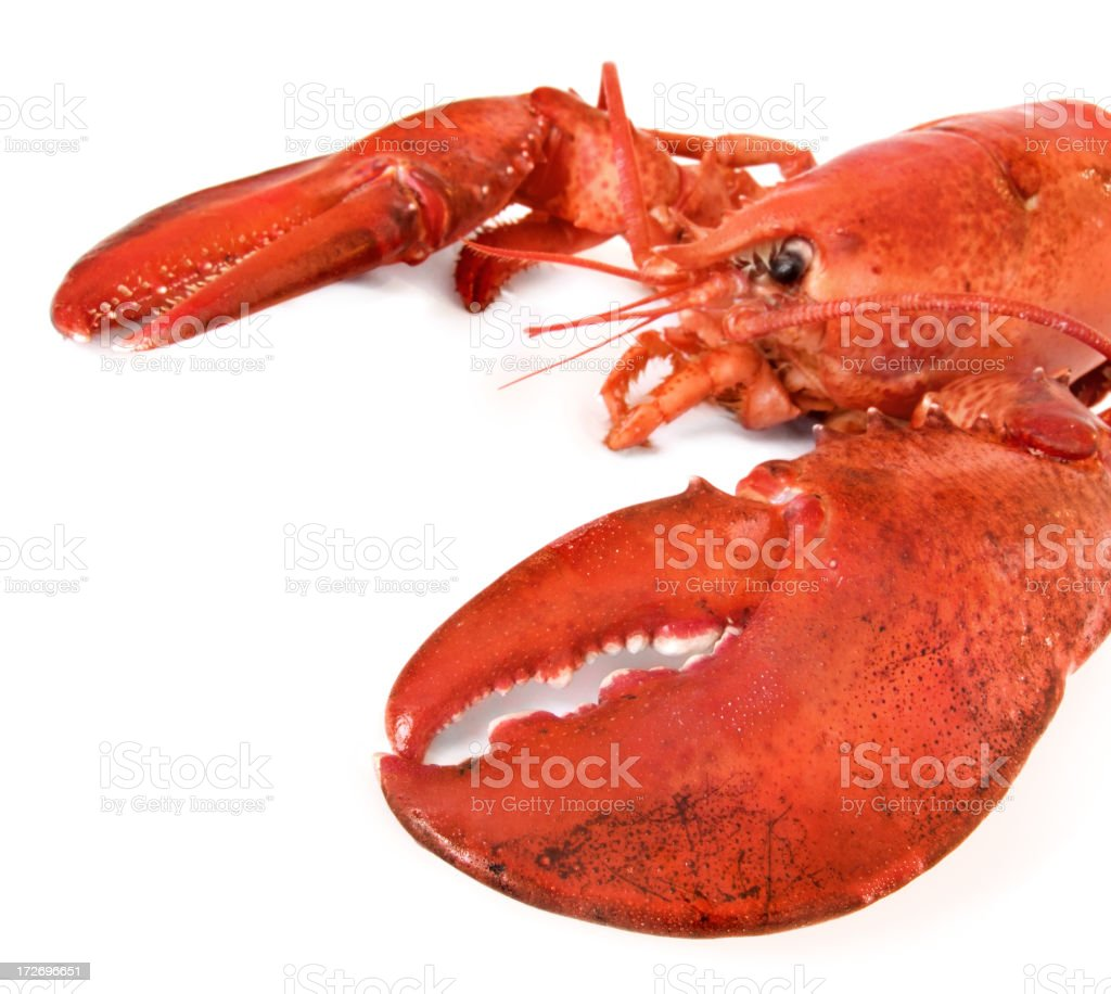 Closeup of bright red lobster isolated on white background royalty-free stock photo