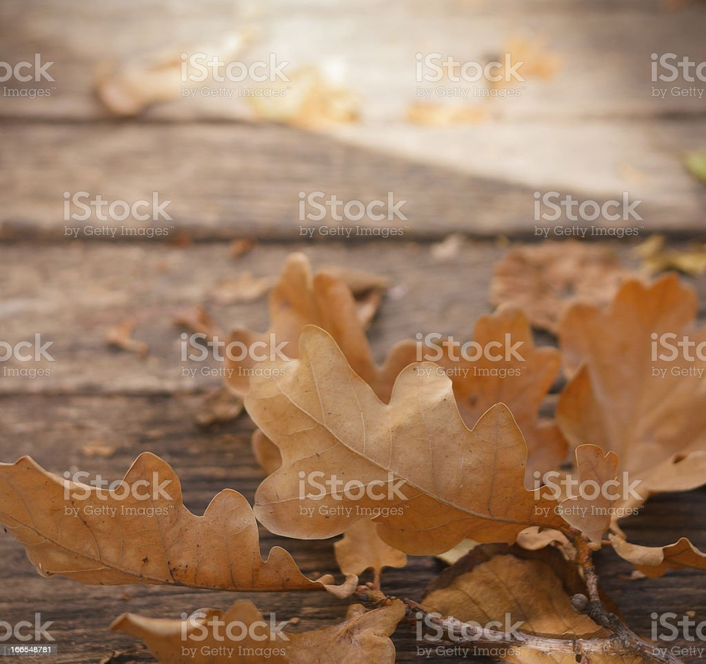 Close-up of brown leaves on wooden ground royalty-free stock photo