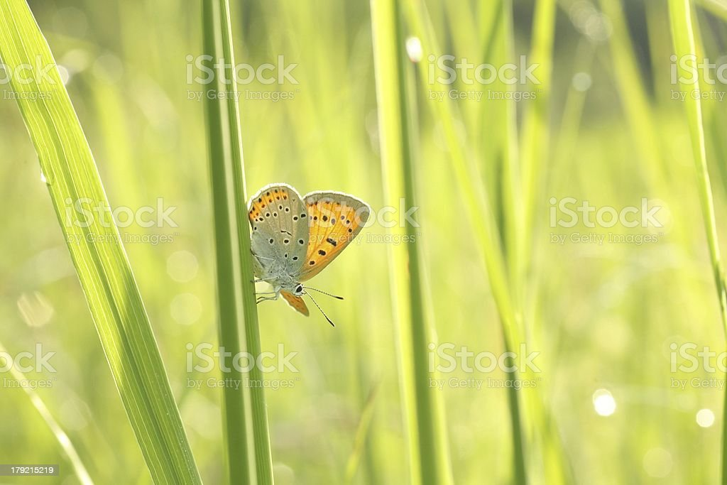 Close-up of butterfly royalty-free stock photo