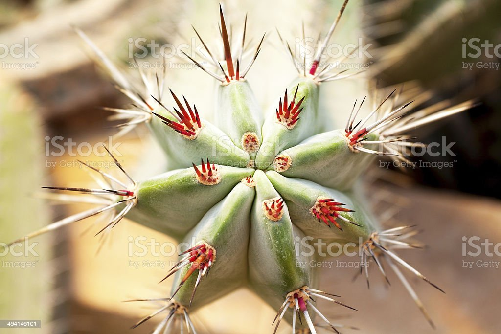 Close-up of cactus royalty-free stock photo