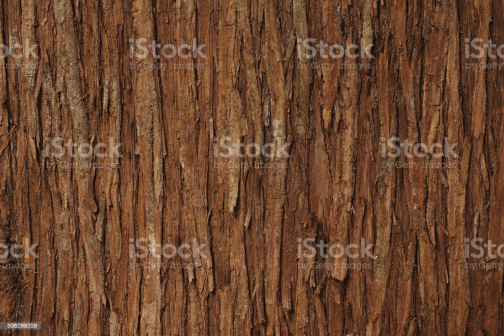 Close-up of cedar tree texture background stock photo