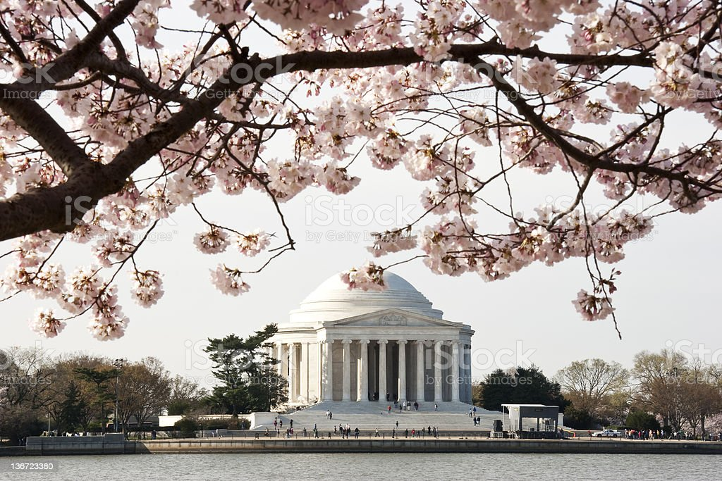 Closeup of cherry blossoms in front of Jefferson Memorial stock photo