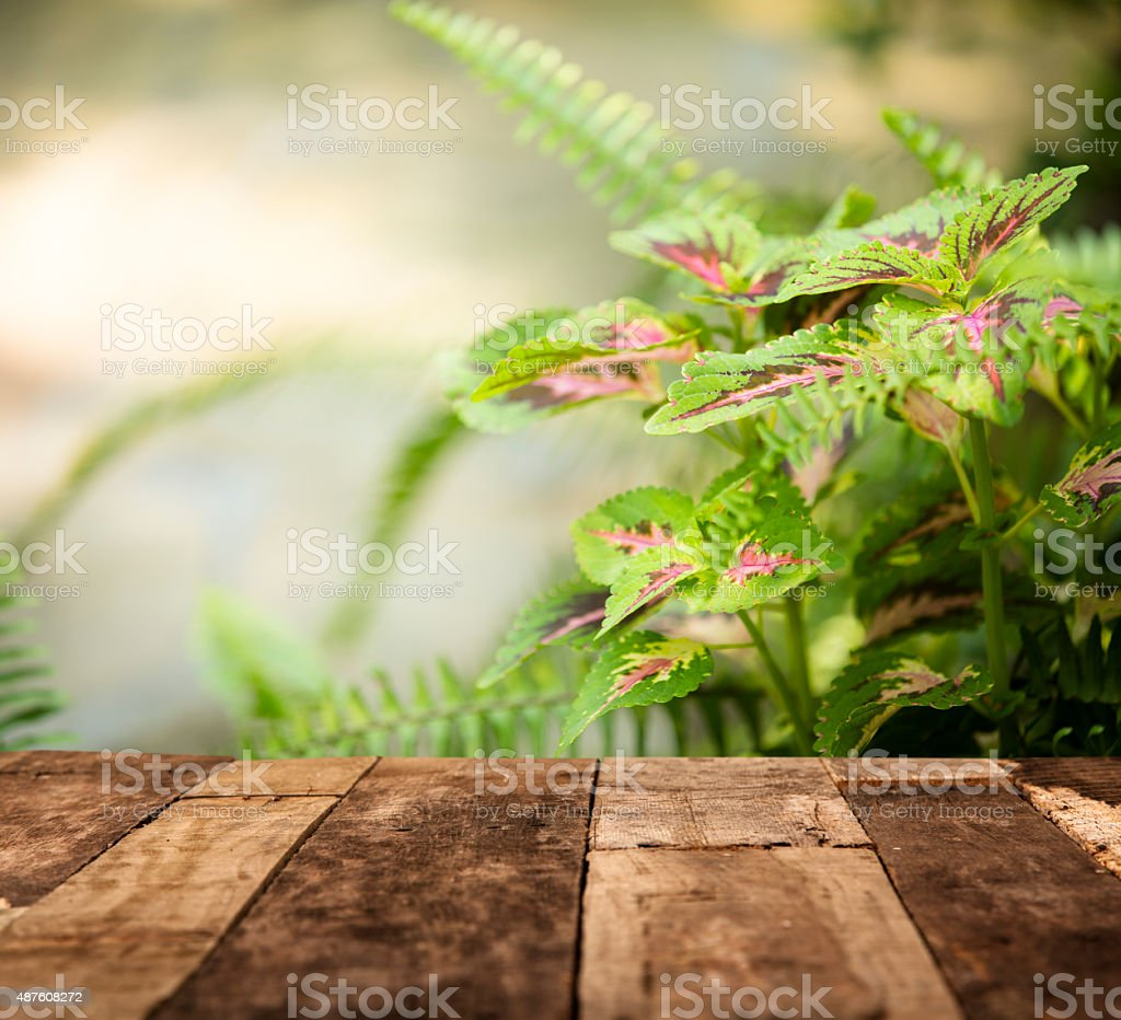 Close-up of Coleus plant leaves and fern. Garden. Deck foreground. stock photo