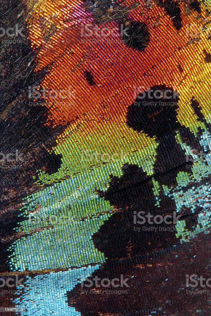 Close-up of colorful butterfly wing stock photo