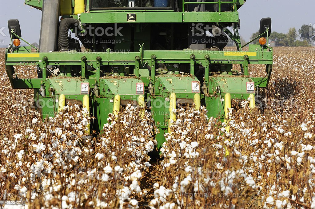 Close-up of Cotton Being Harvested stock photo