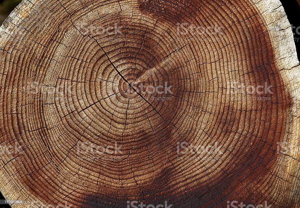 Close-up of cracked tree rings of an old tree stock photo