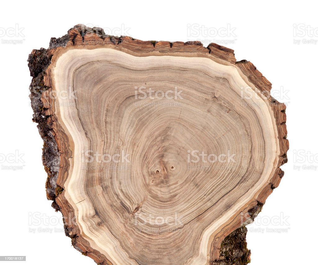 Close-up of cross section of a wood log with annual rings royalty-free stock photo