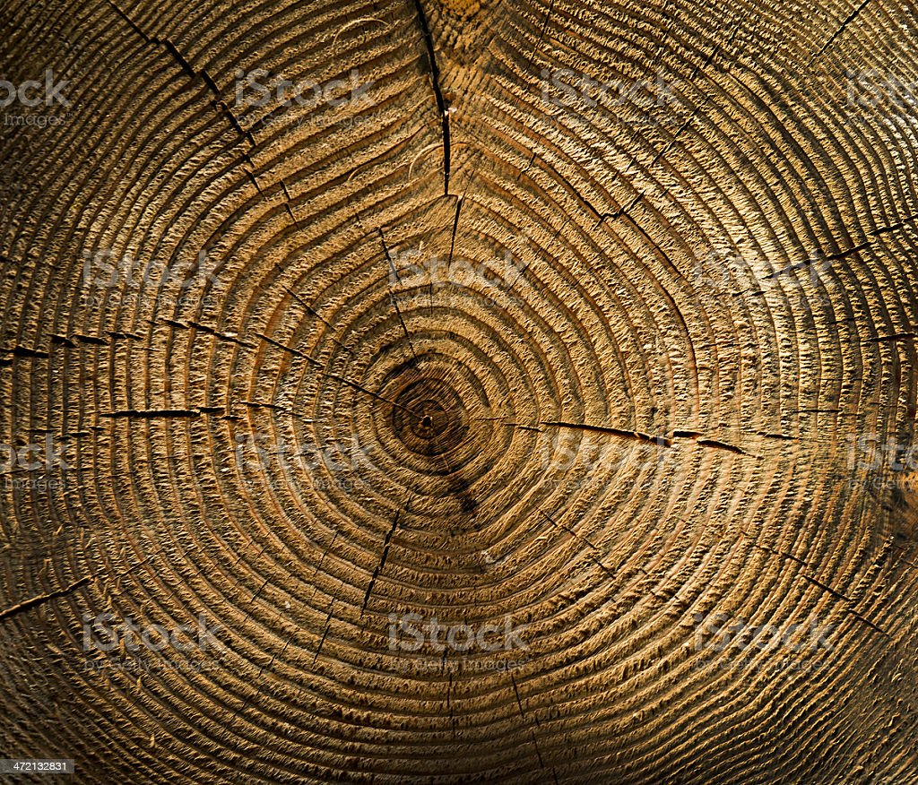 Close-up of cross section of tree trunk and rings stock photo