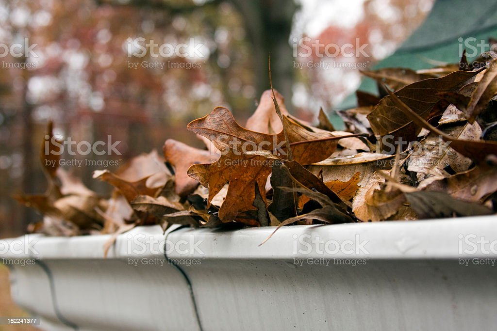 Close-up of dead leaves overflowing a gutter stock photo