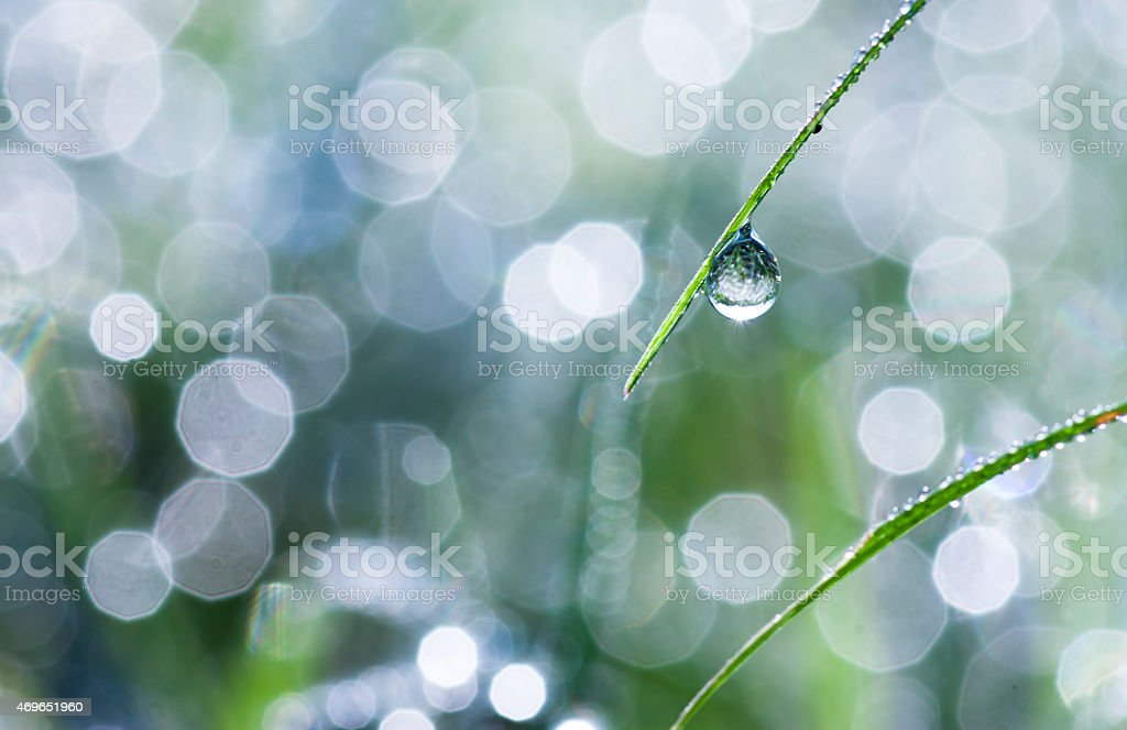 Close-up of dew drops on green grass blade stock photo