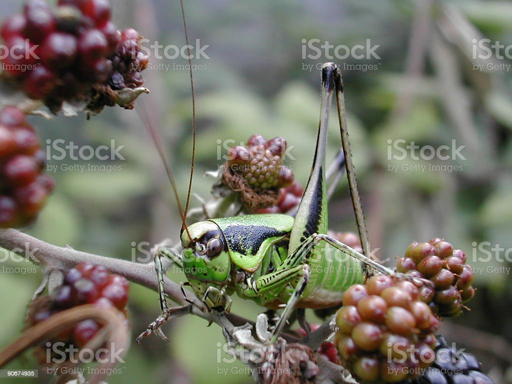 closeup of dew on cricket royalty-free stock photo