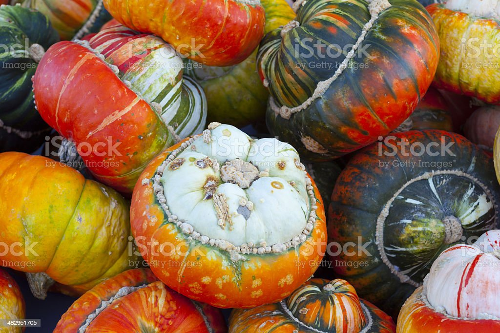 Close-up of different acorn squash royalty-free stock photo