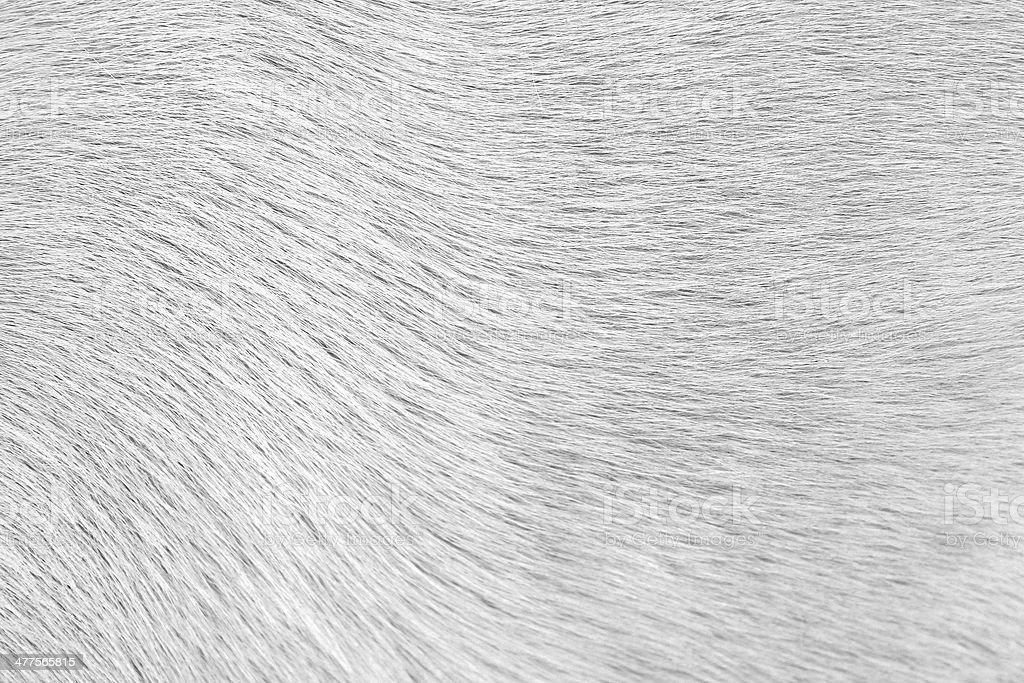 Close-up of dog fur stock photo
