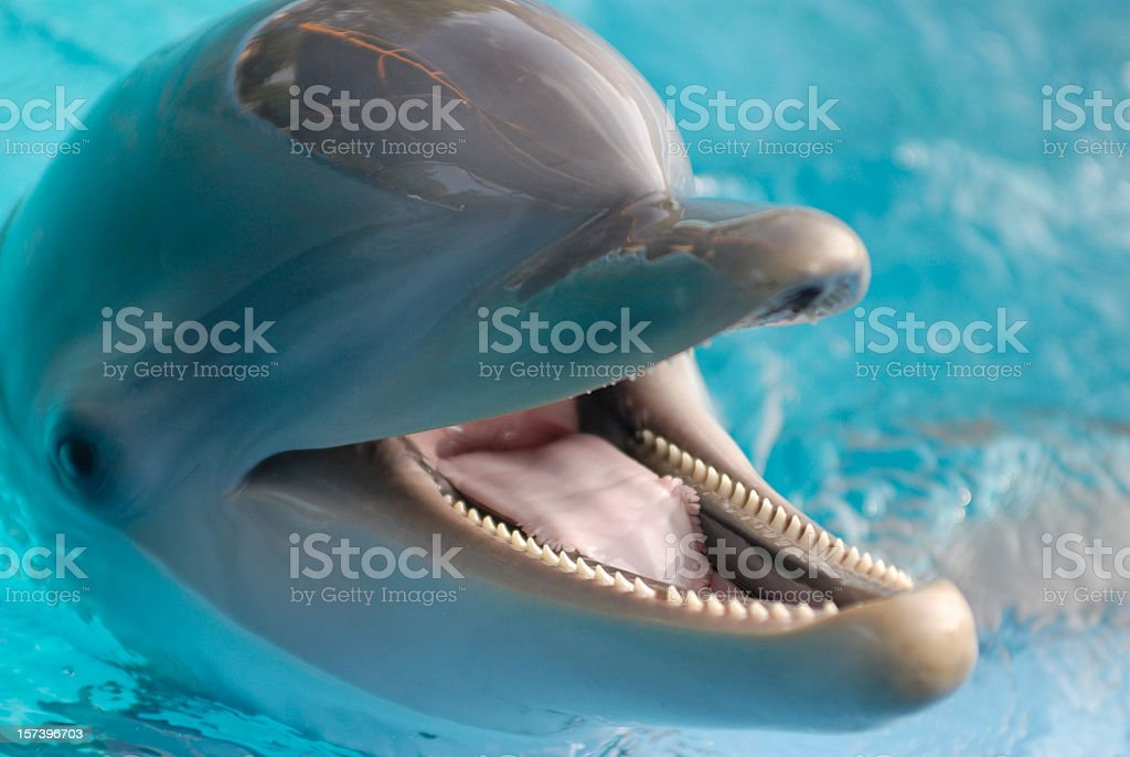 Close-up of dolphin royalty-free stock photo