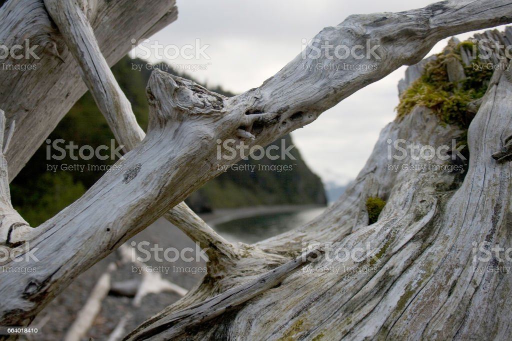 Closeup of Driftwood on Shore stock photo