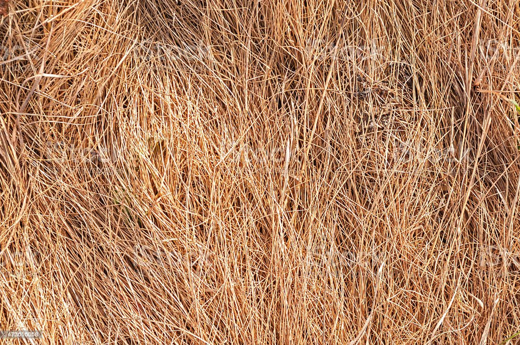 Close-up of dry grass ,wallpaper,background stock photo