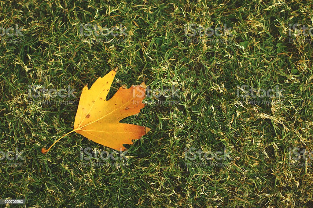 Close-Up Of Dry Leaves On Grassy Field stock photo
