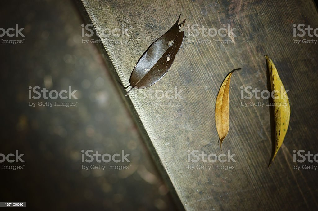 Close-up of Dry Leaves stock photo