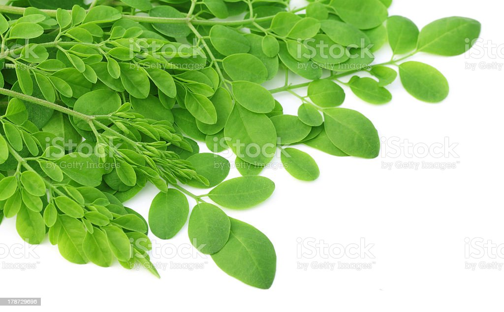 Close-up of edible moringa leaves on white background stock photo