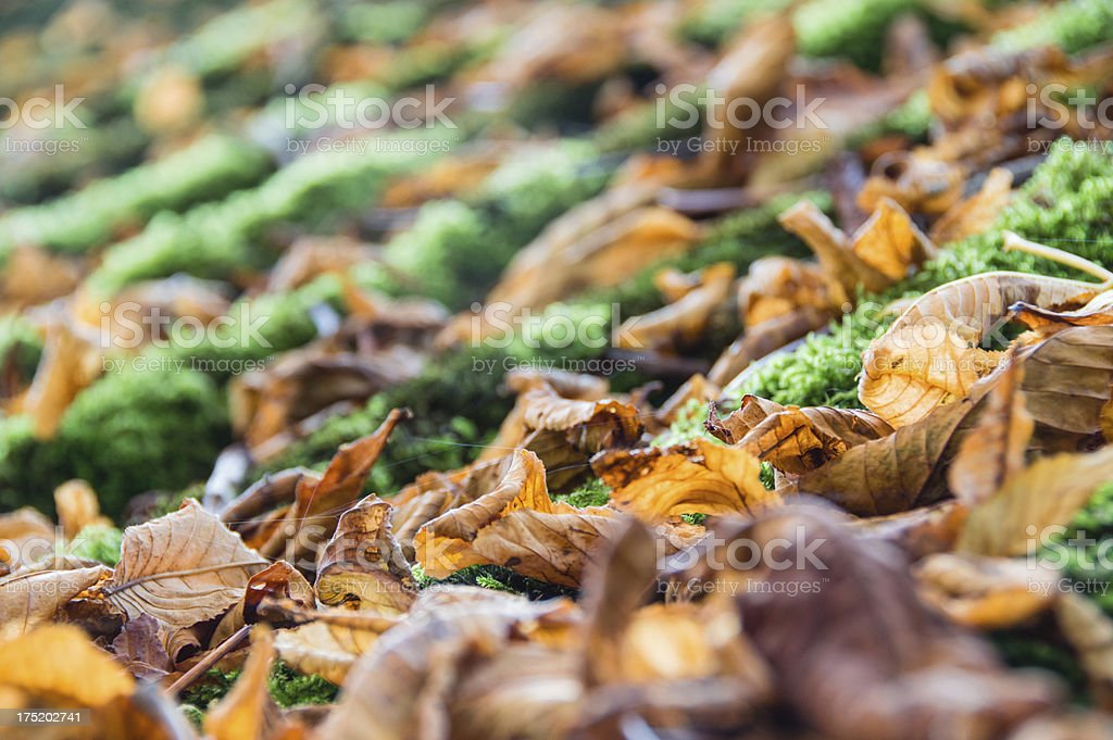 Close-up of fallen leafs royalty-free stock photo