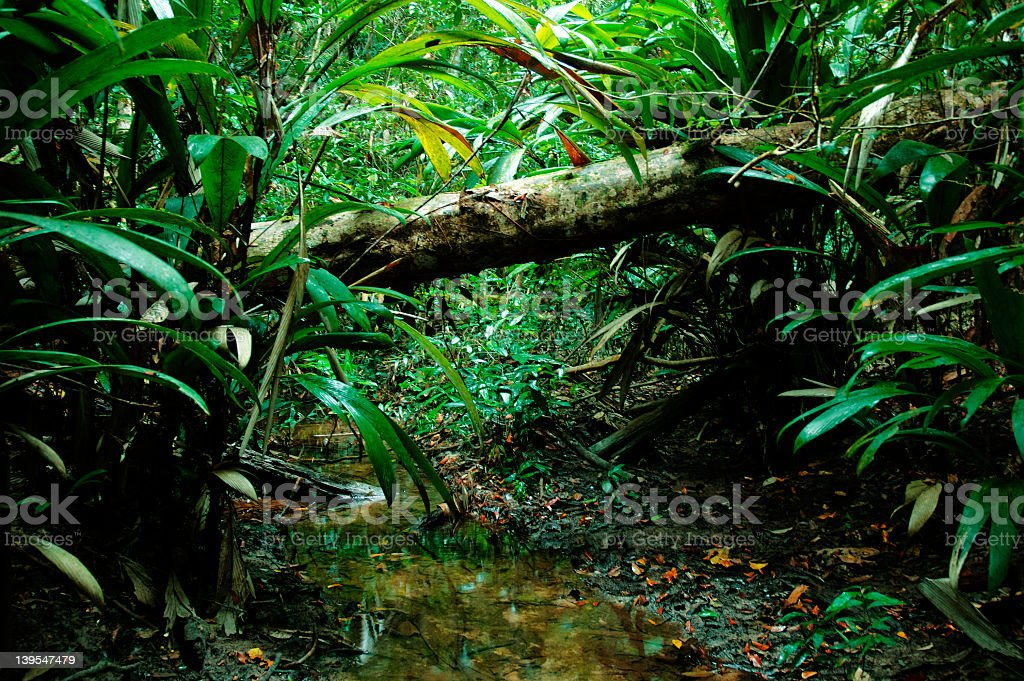 Close-up of fallen tree in the jungle royalty-free stock photo