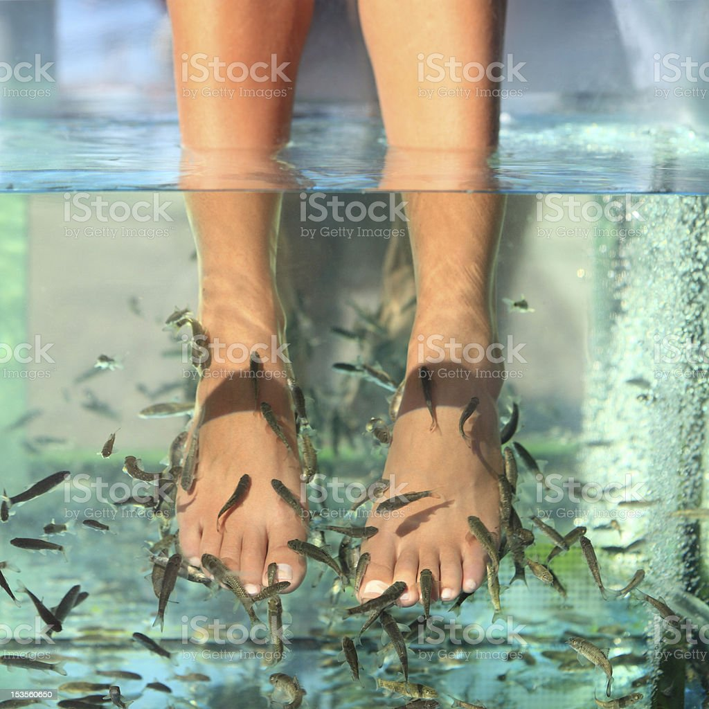 Close-up of feet undergoing a fish spa skin treatment stock photo