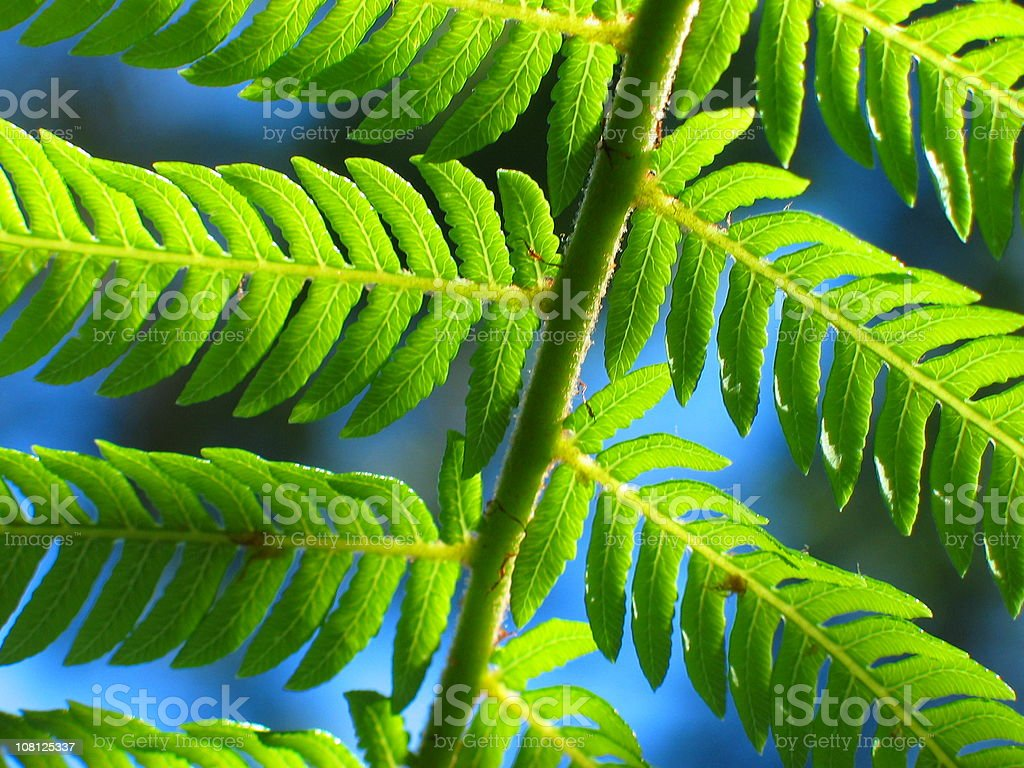 close-up of fern in new zealand royalty-free stock photo