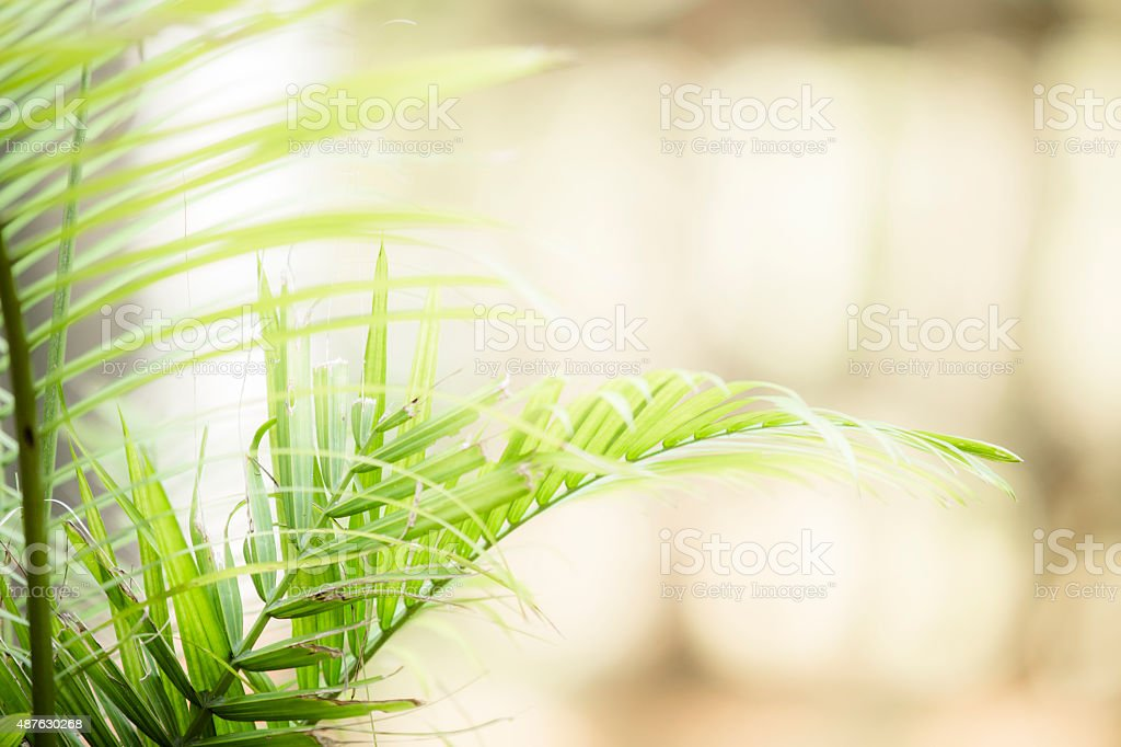 Close-up of fern plant leaves in garden. Copyspace. stock photo