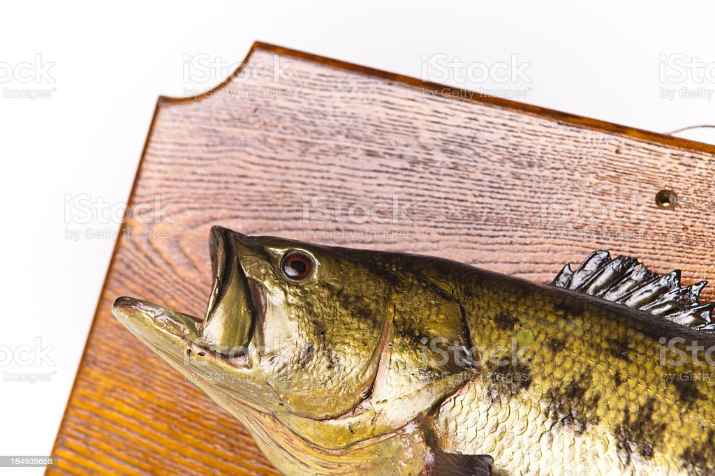 Close-Up of Fish Plaque royalty-free stock photo