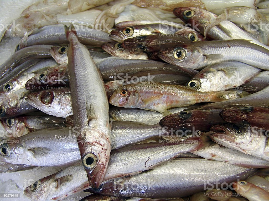 close-up of fishes royalty-free stock photo