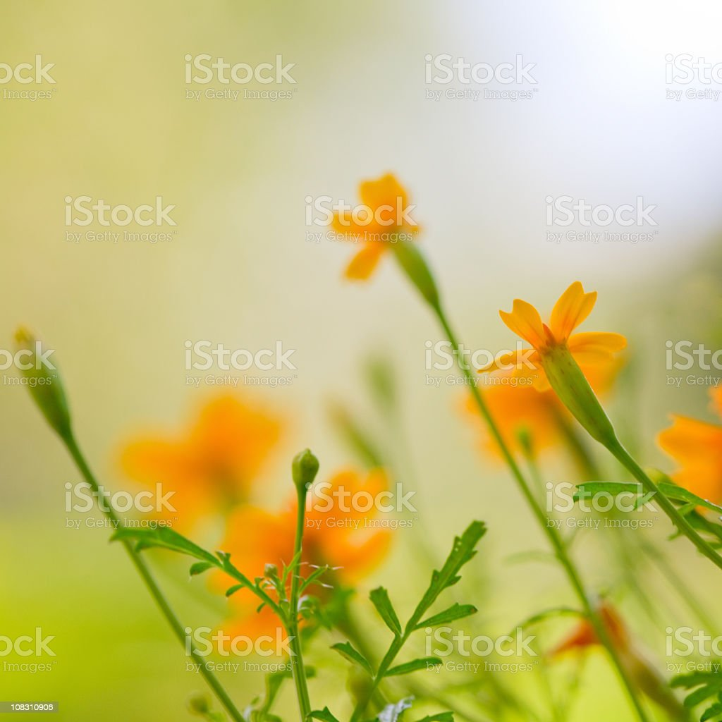 Close-up of flower meadow with a blurred background stock photo