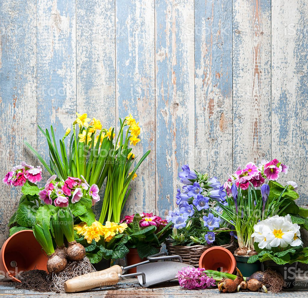 A close-up of flowers and gardening tools stock photo