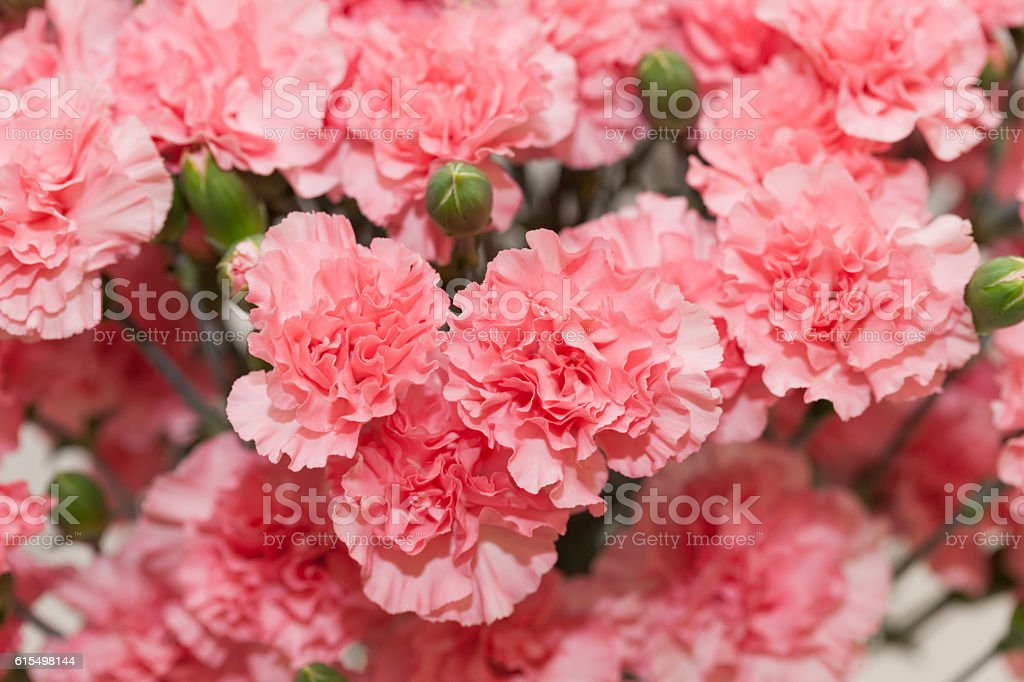 Close-up of flowers stock photo