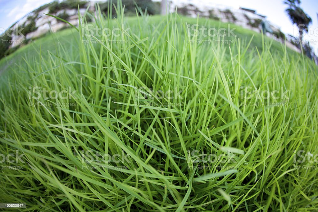 Close-up of fresh grass royalty-free stock photo