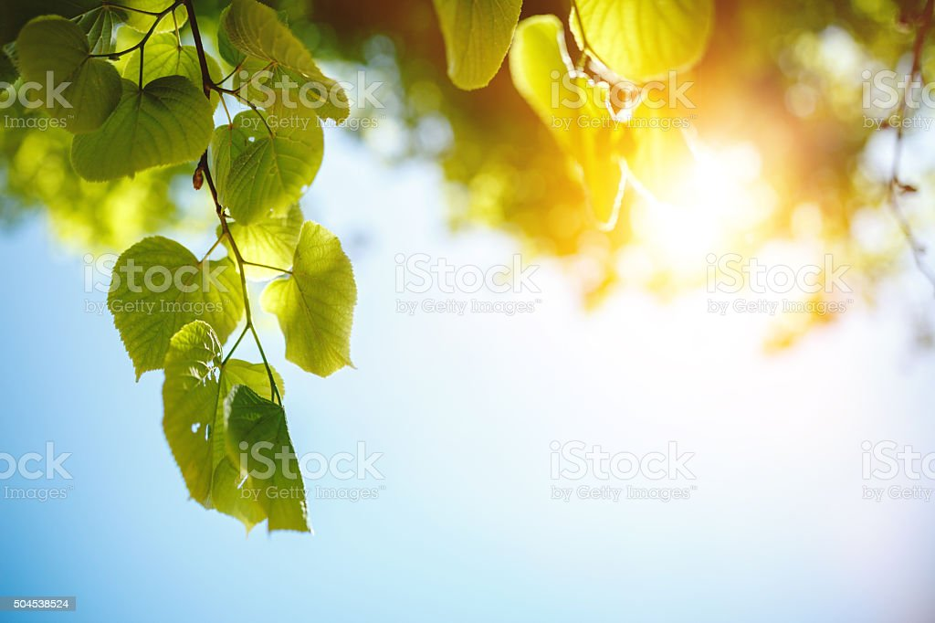 Close-up of fresh green leafs stock photo