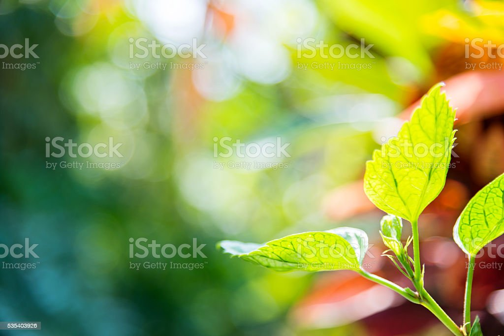 Close-up of fresh green leaves for background stock photo