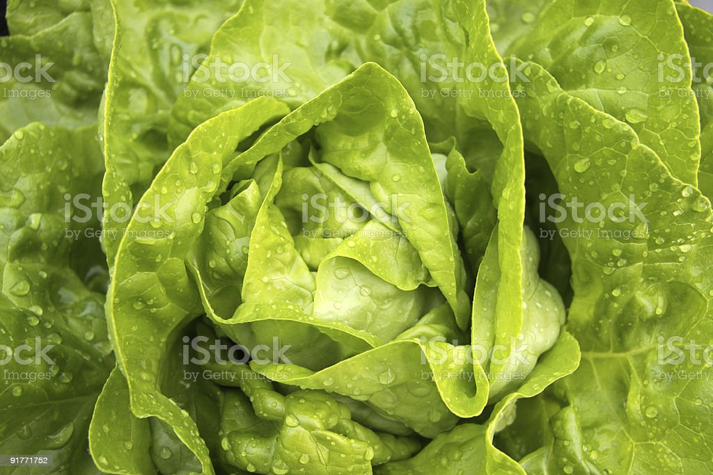 A close-up of fresh green lettuce stock photo