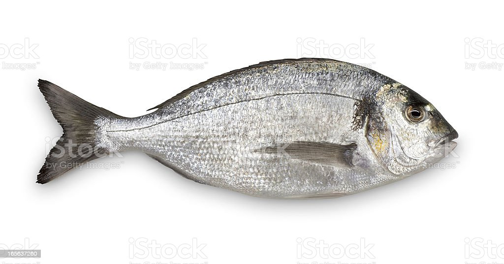 Close-up of fresh Sea Bream against white background stock photo