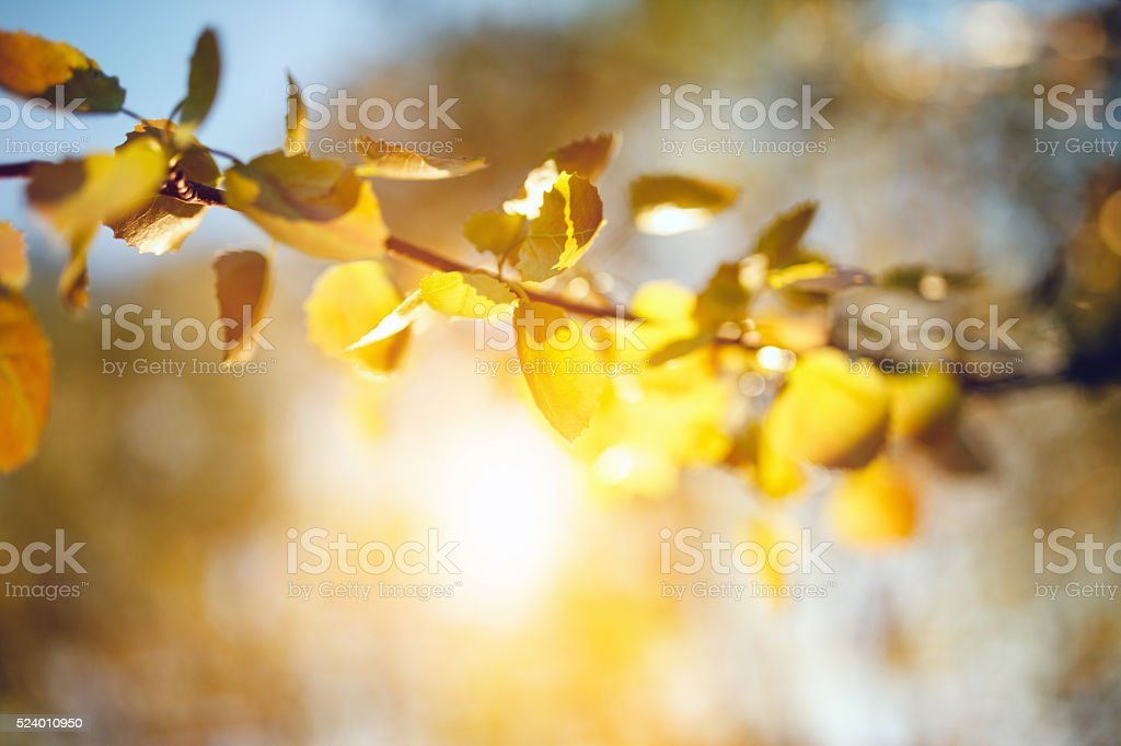 Close-up of fresh spring leafs stock photo