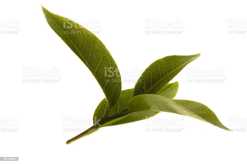 Close-up of fresh tea leaves on a white background royalty-free stock photo