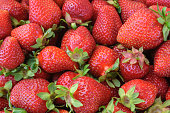 Close-up of Freshly Harvested Strawberries