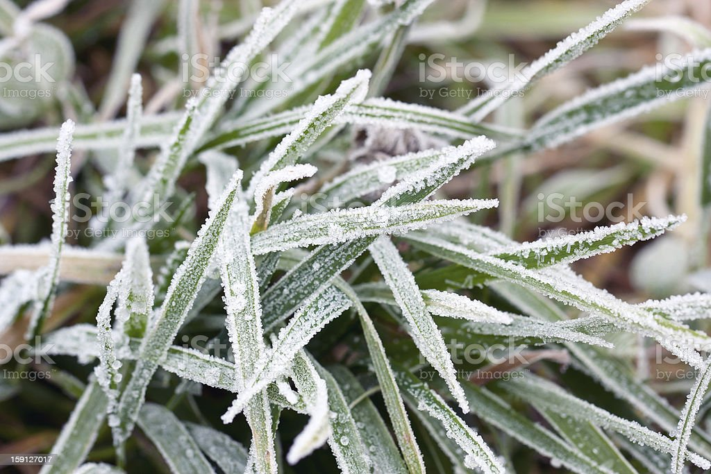 Closeup of frosty grass royalty-free stock photo