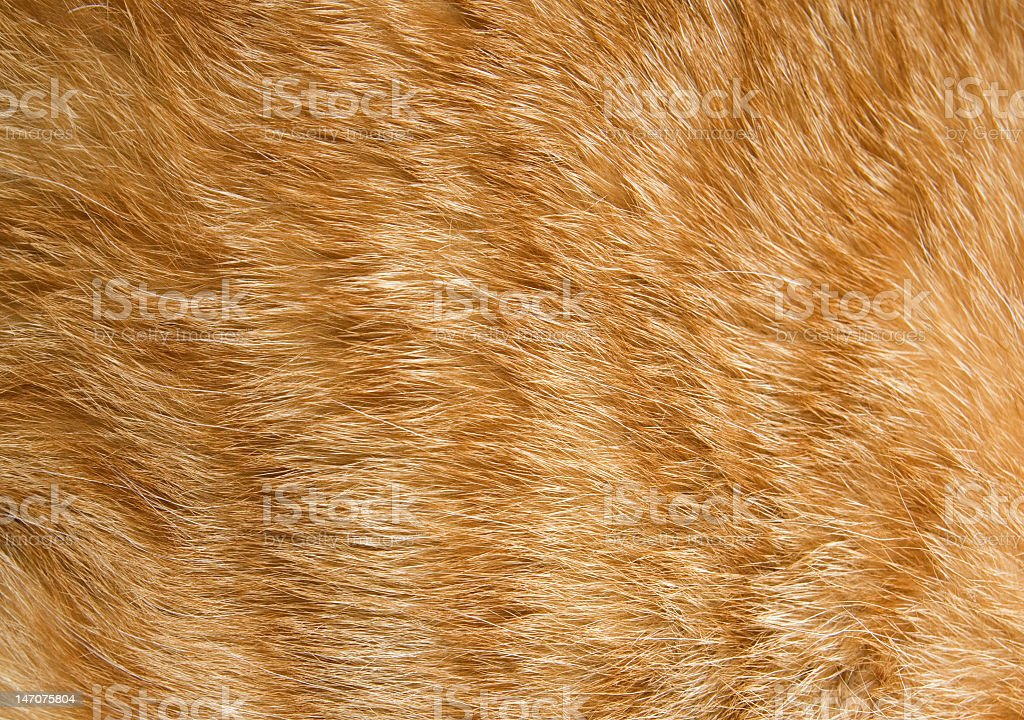 Close-up of fur on an orange cat stock photo